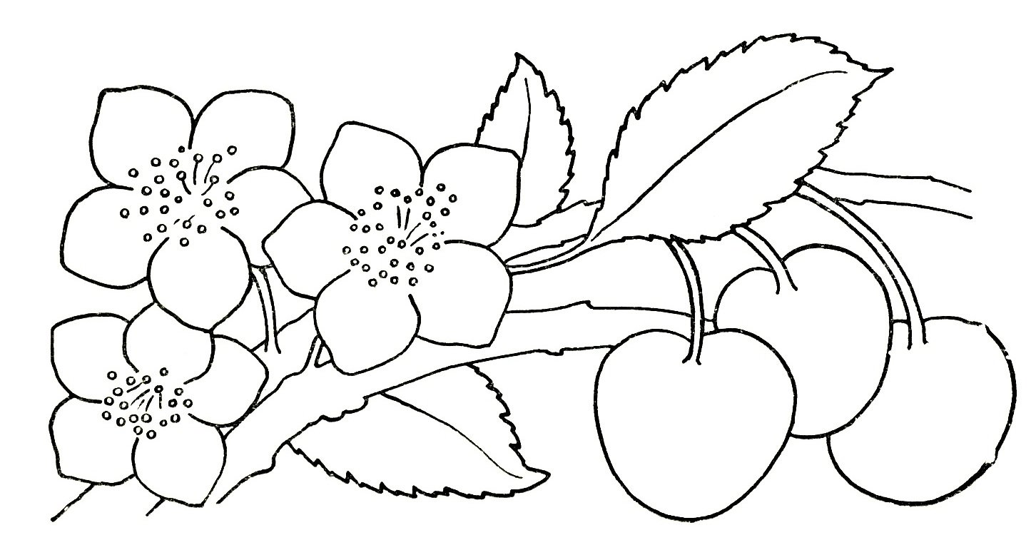 Flowers Drawing For Kids