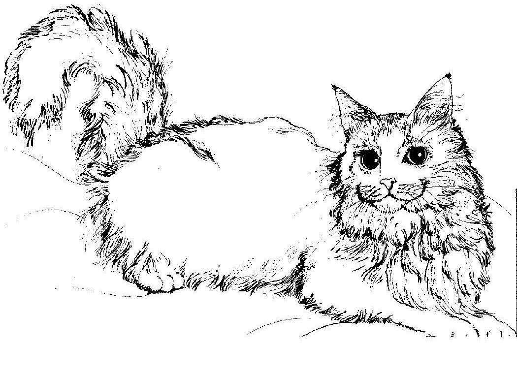 Awesome Cat Coloring Pages 42 In Seasonal Colouring Pages With Cat