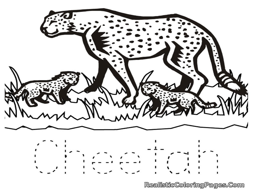 Beautiful Cheetah Coloring Page 32 In Free Colouring Pages With