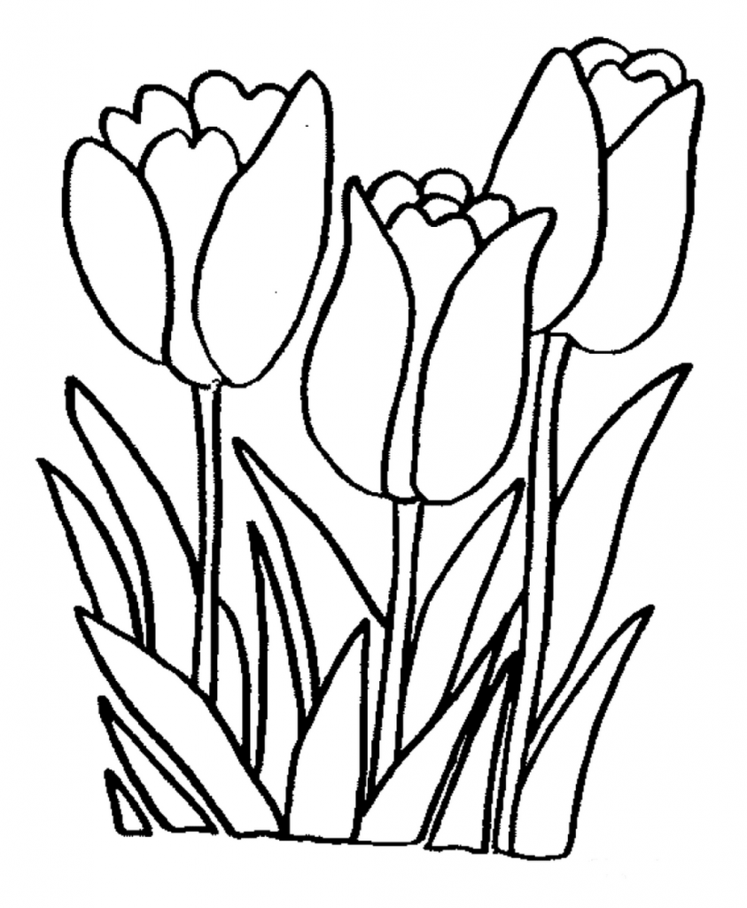 Best Free Printable Tulip Flowers Coloring Pages Printable For