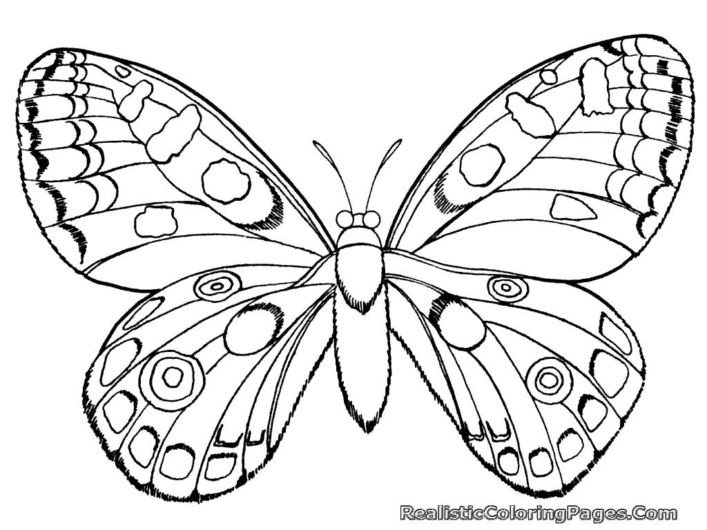 Bug Coloring Pages 3652 Realistic Insect For Free Printable
