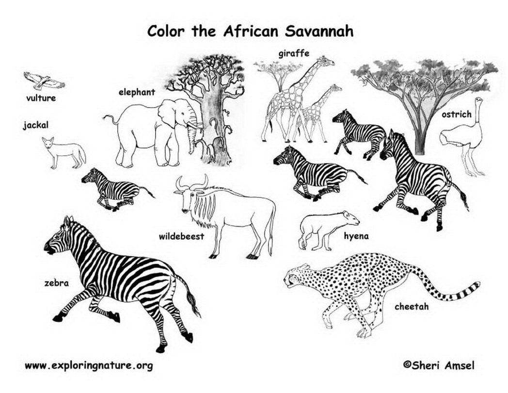 Coloring Pages African Animals Best Of