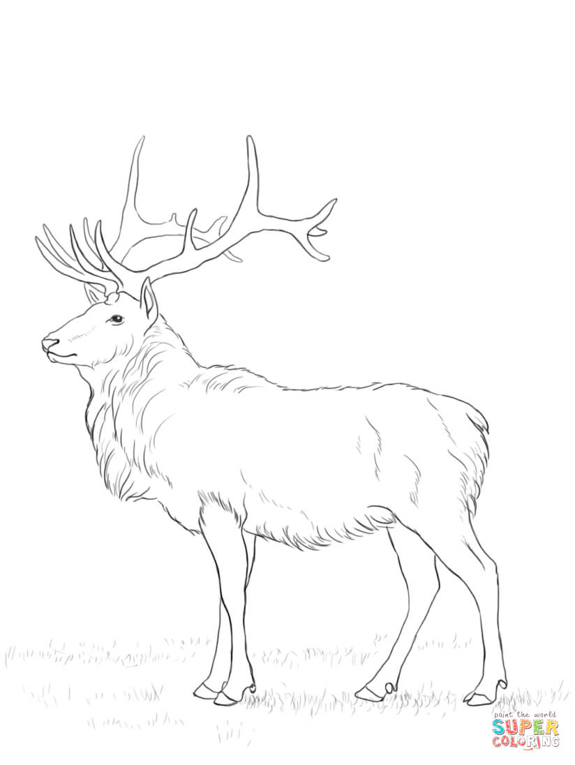 Deers Coloring Pages