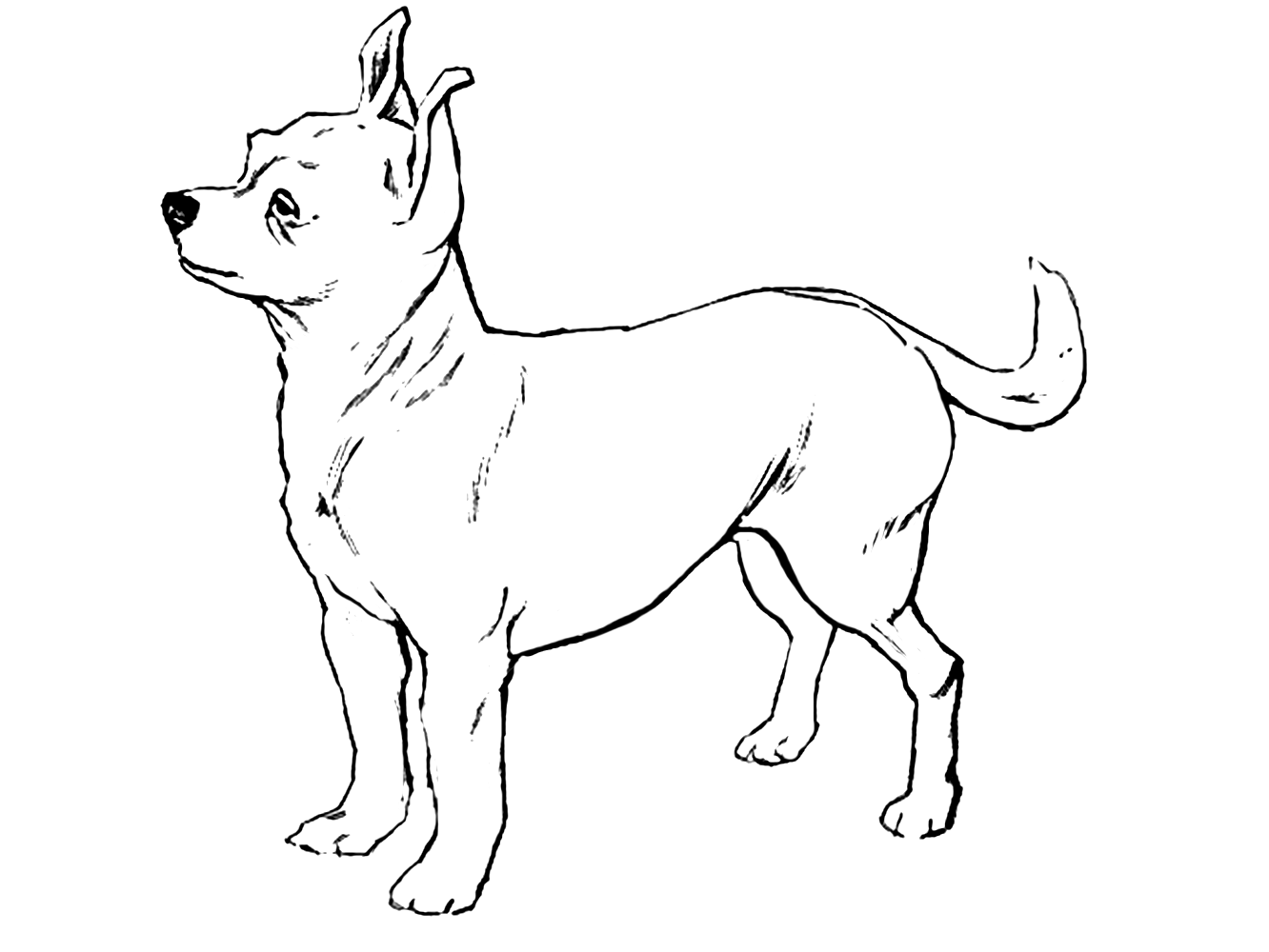Dog Color Pages Printable Within Chihuahua Coloring New