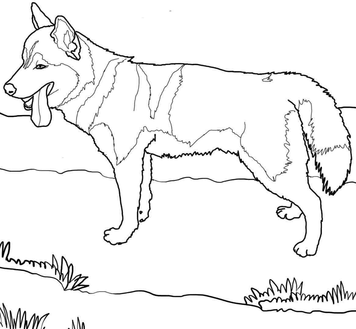Fancy Coloring Pages Dogs 28 About Remodel Coloring Pages For