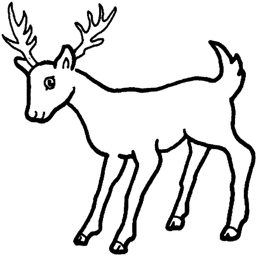 Fancy Deer Coloring Page 11 On Coloring Pages For Kids Online With