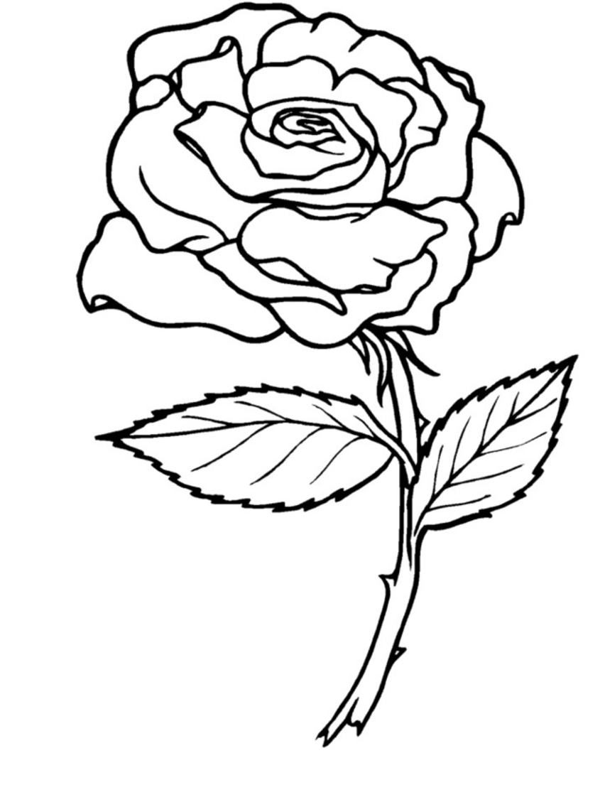 Fancy Rose Coloring Page 73 On Coloring Pages For Kids Online With