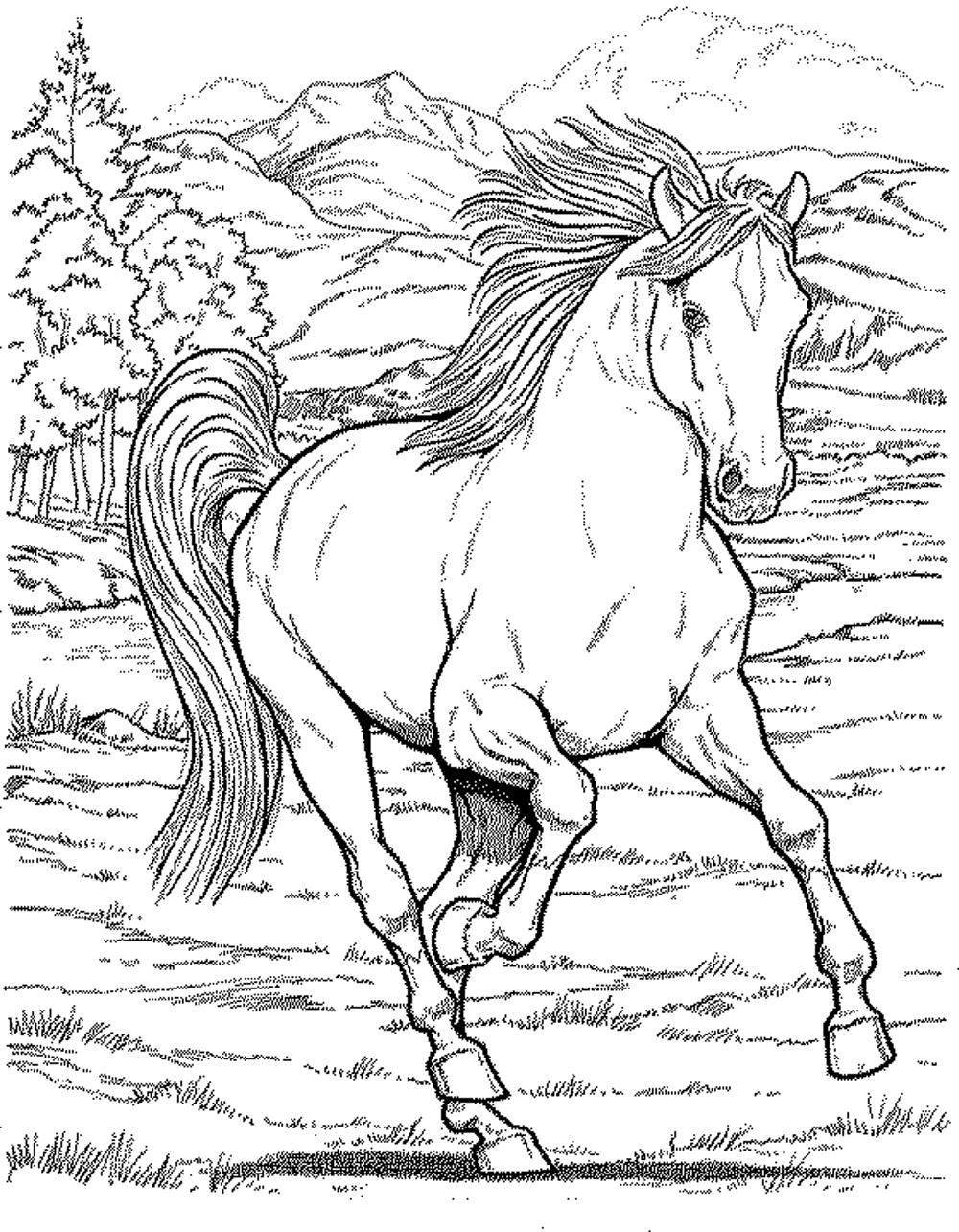 Free Horse Coloring Pages For Adults Archives Within Horse