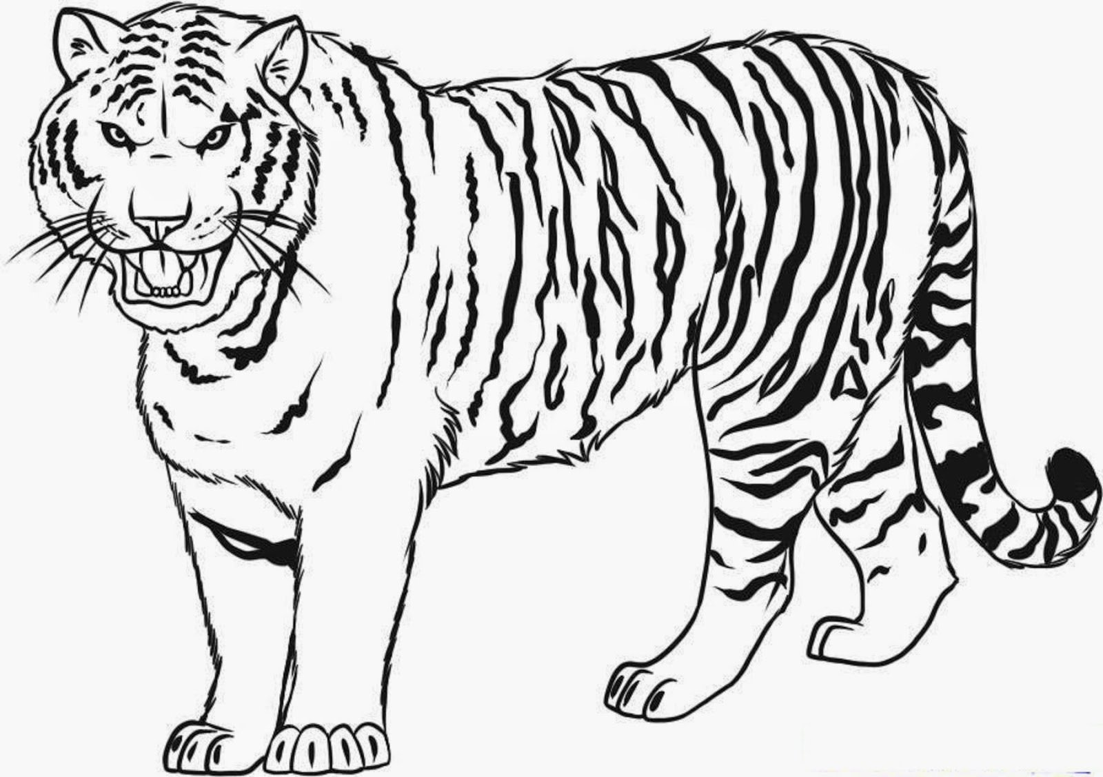 Free Printable Tiger Roar Coloring Pages For Kids