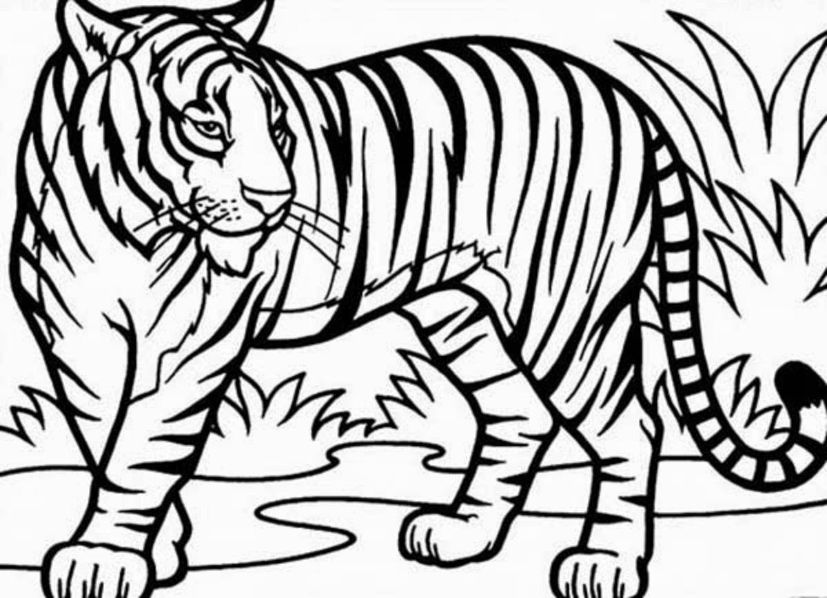 Fresh Tiger Coloring Page 17 For Your Free Coloring Kids With