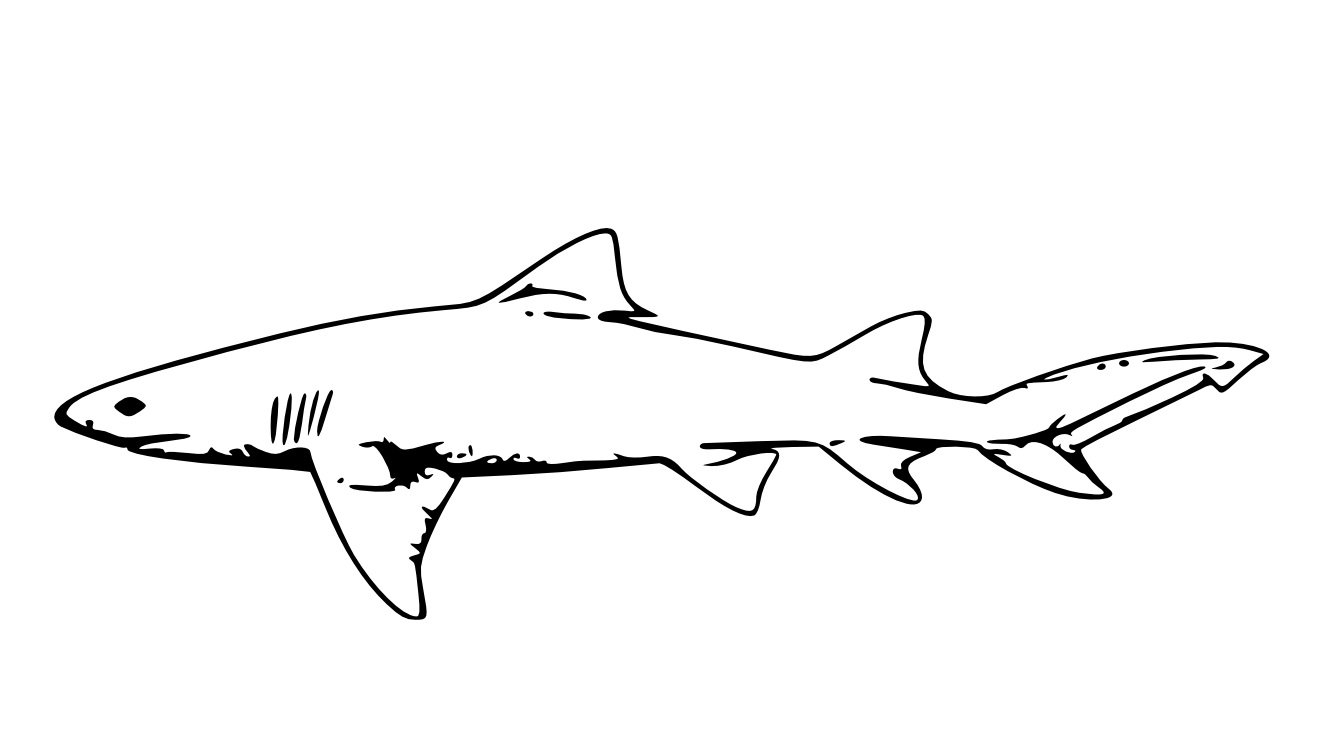 Printable Shark Coloring Pages   Wallpaper Download