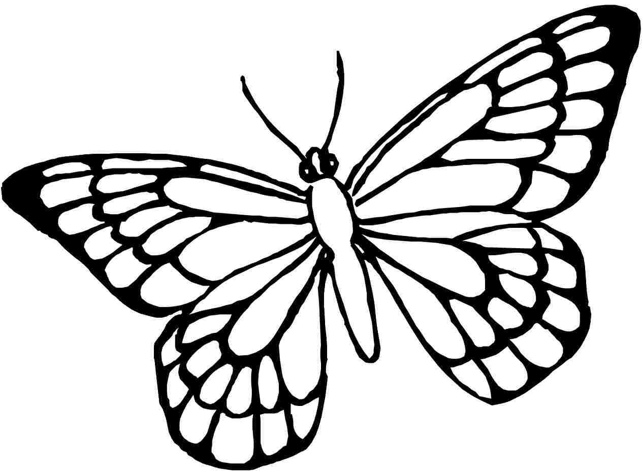 Inspirational Coloring Pages Of Butterflies 66 In Free Coloring