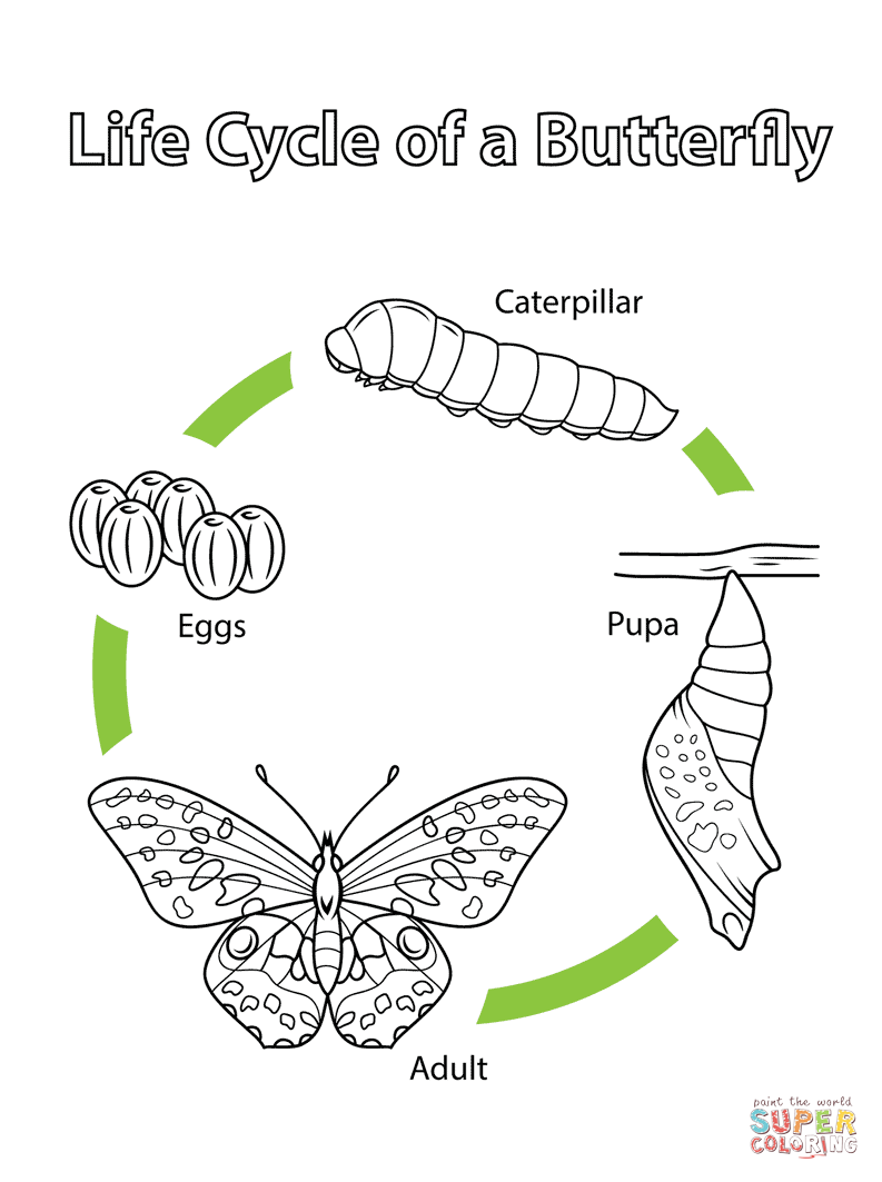 Biology Coloring Pages