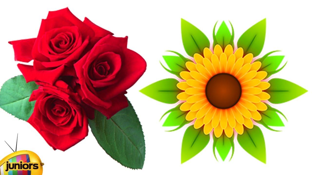 Learn Flowers For Kids