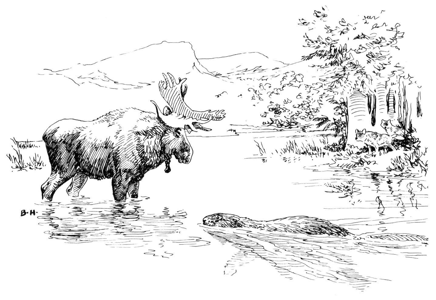 Moose Coloring Pages Gekimoe 43591 In