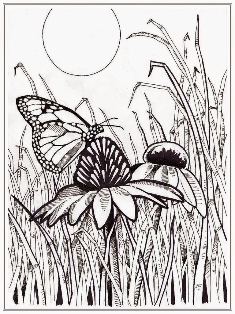 Online Butterfly Coloring Pages For Adults 11 With Additional To