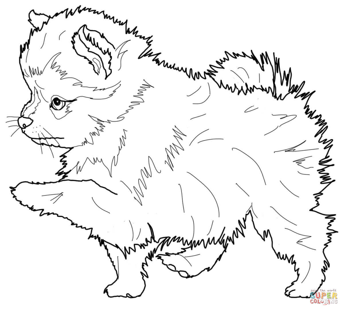Pomeranian Dog And Chihuahua Coloring Page Coloring Pages