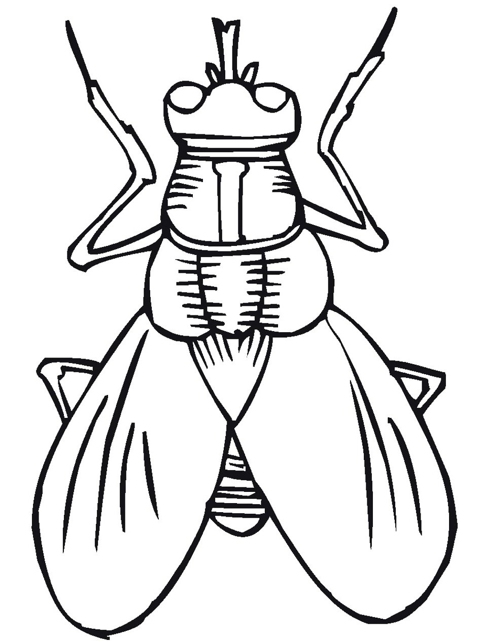 Printble Bug Colouring Pages For Kids