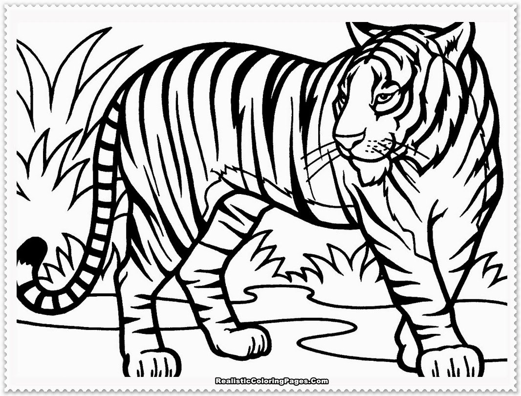 Tiger Coloring Page 01 Inside Tiger Coloring Pages