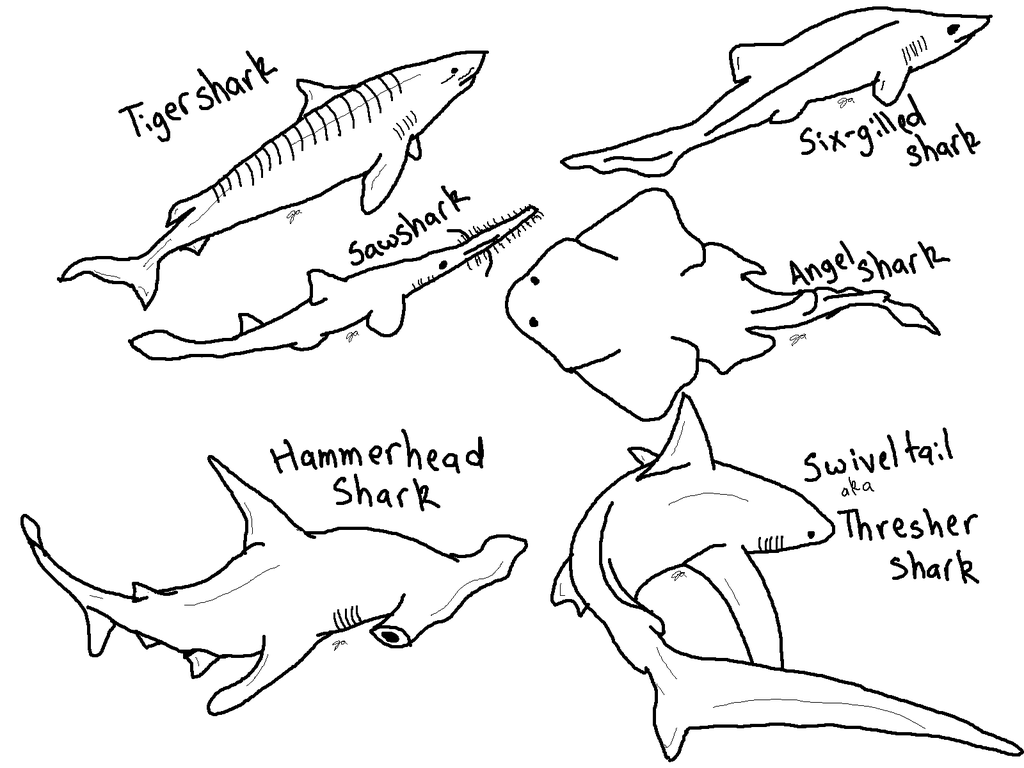 To Print Printable Shark Coloring Pages 95 For Sheets With