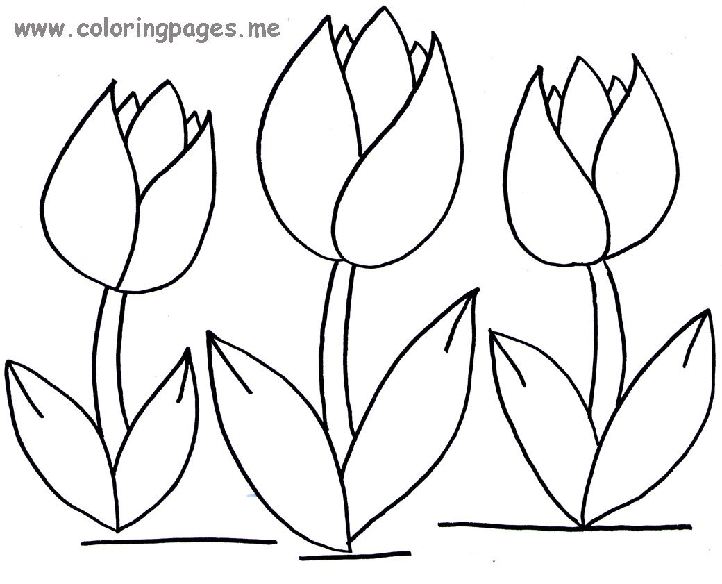 Download Tulip Coloring Pages