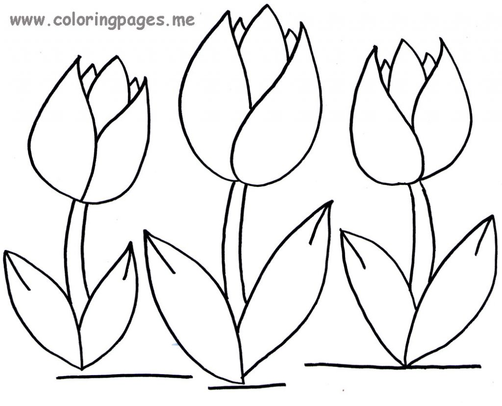 Tulip Coloring Pages And