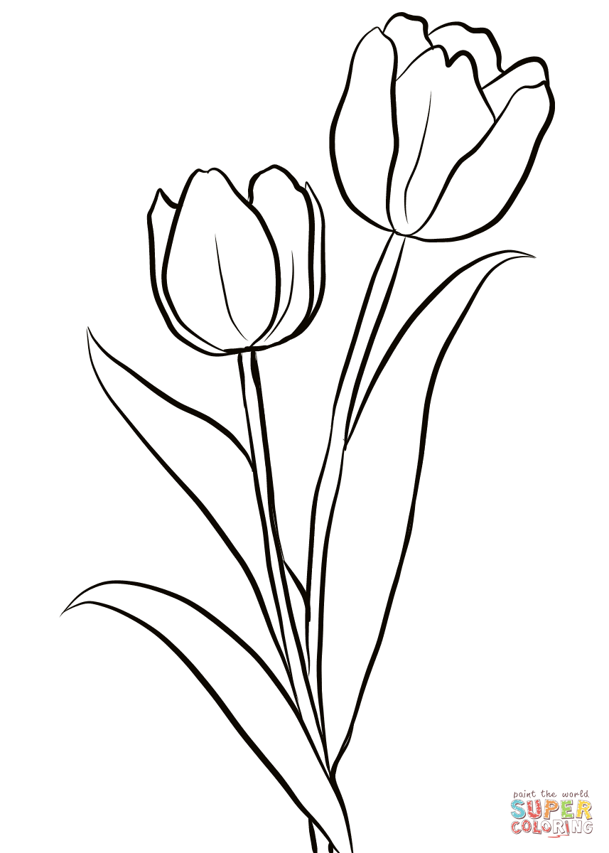 Two Tulips Coloring Page