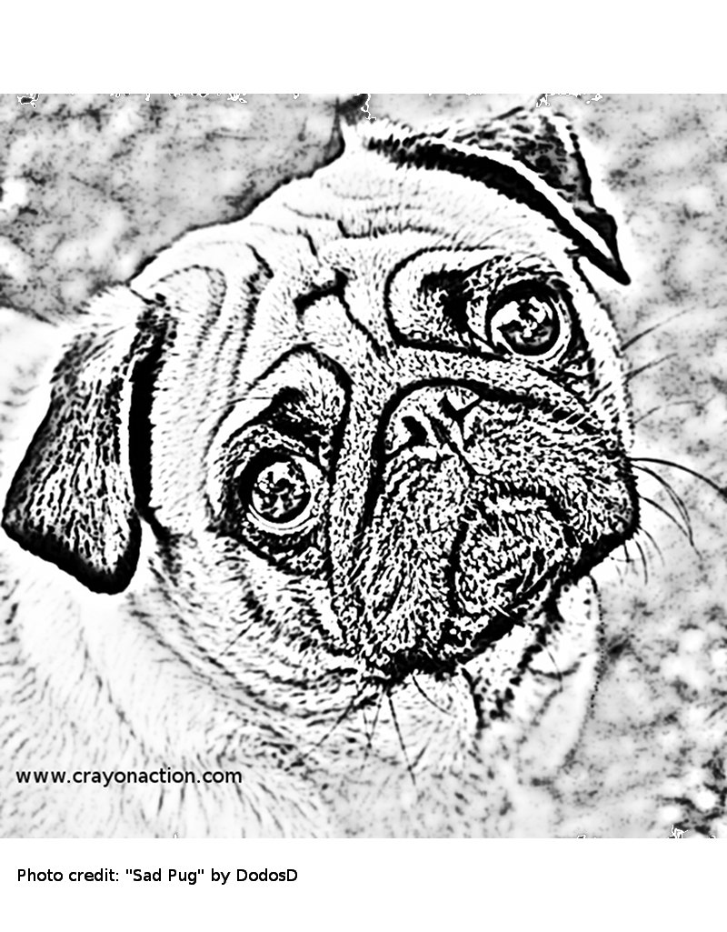 Pugs Just Look Like They Might Be Sad Practically All The Time