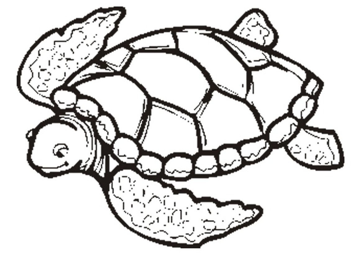 Awesome Turtle Coloring Pages 75 For Seasonal Colouring Pages With