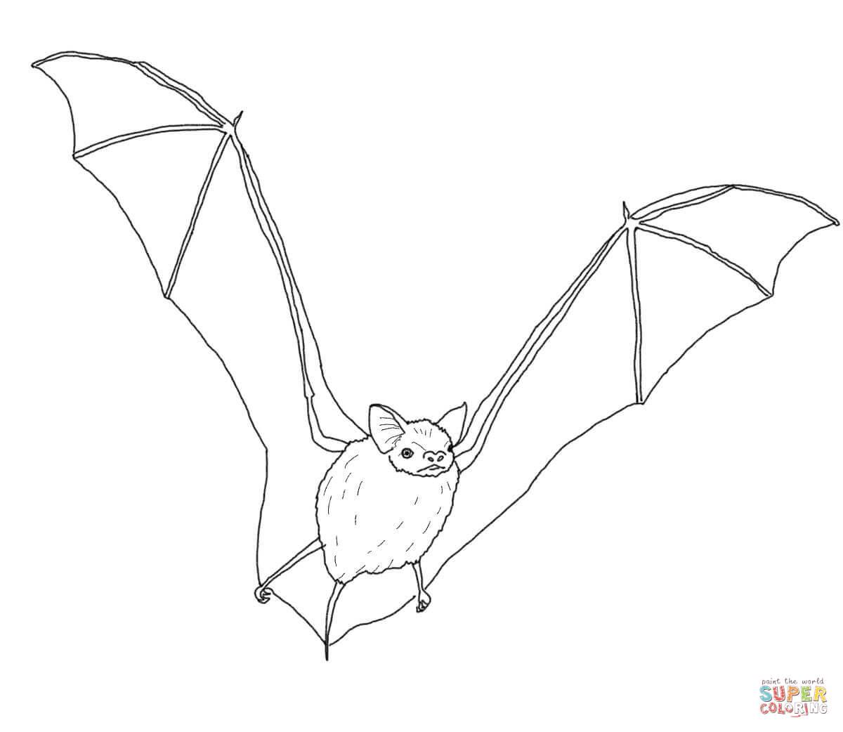 Bats Coloring Pages