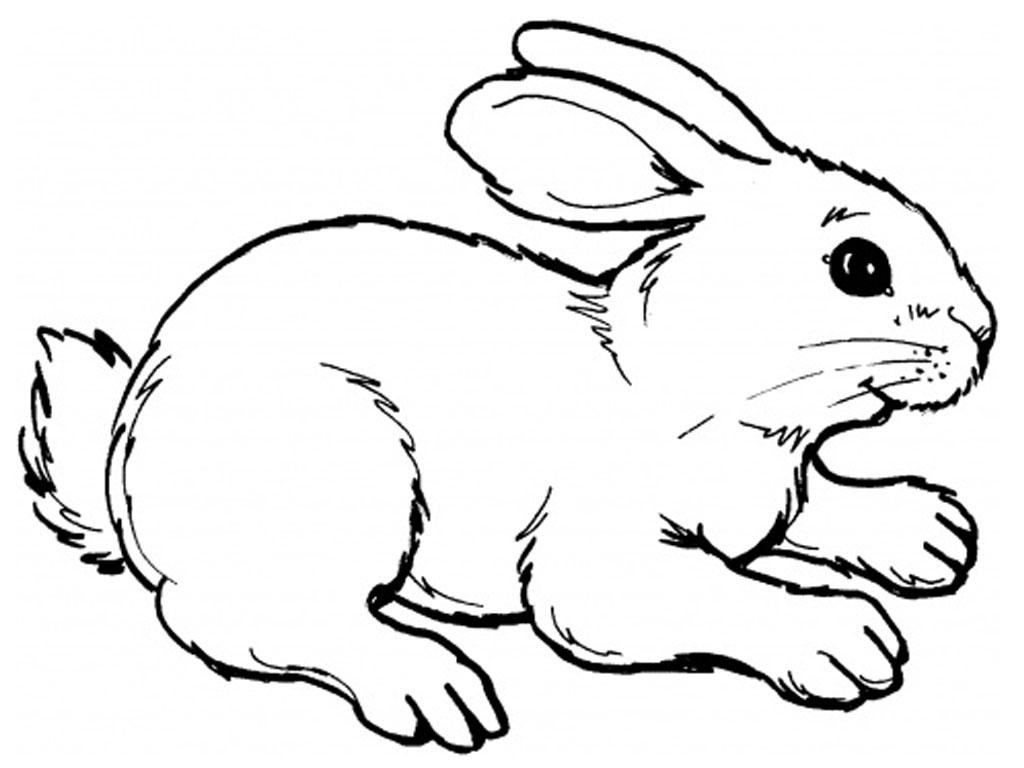 Drawn Rabbit Coloring Page