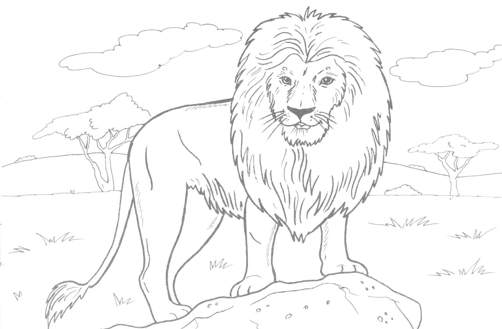 Free Printable Lion Coloring Pages For Kids With Color Page