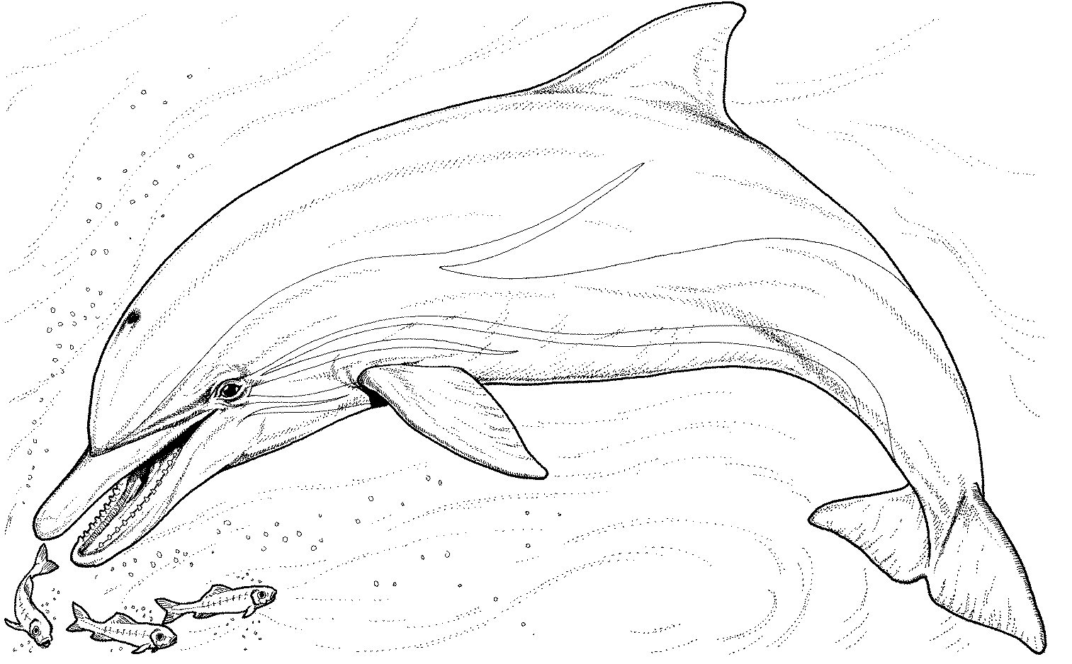 Fresh Dolphin Coloring Pages 75 On Free Colouring Pages With