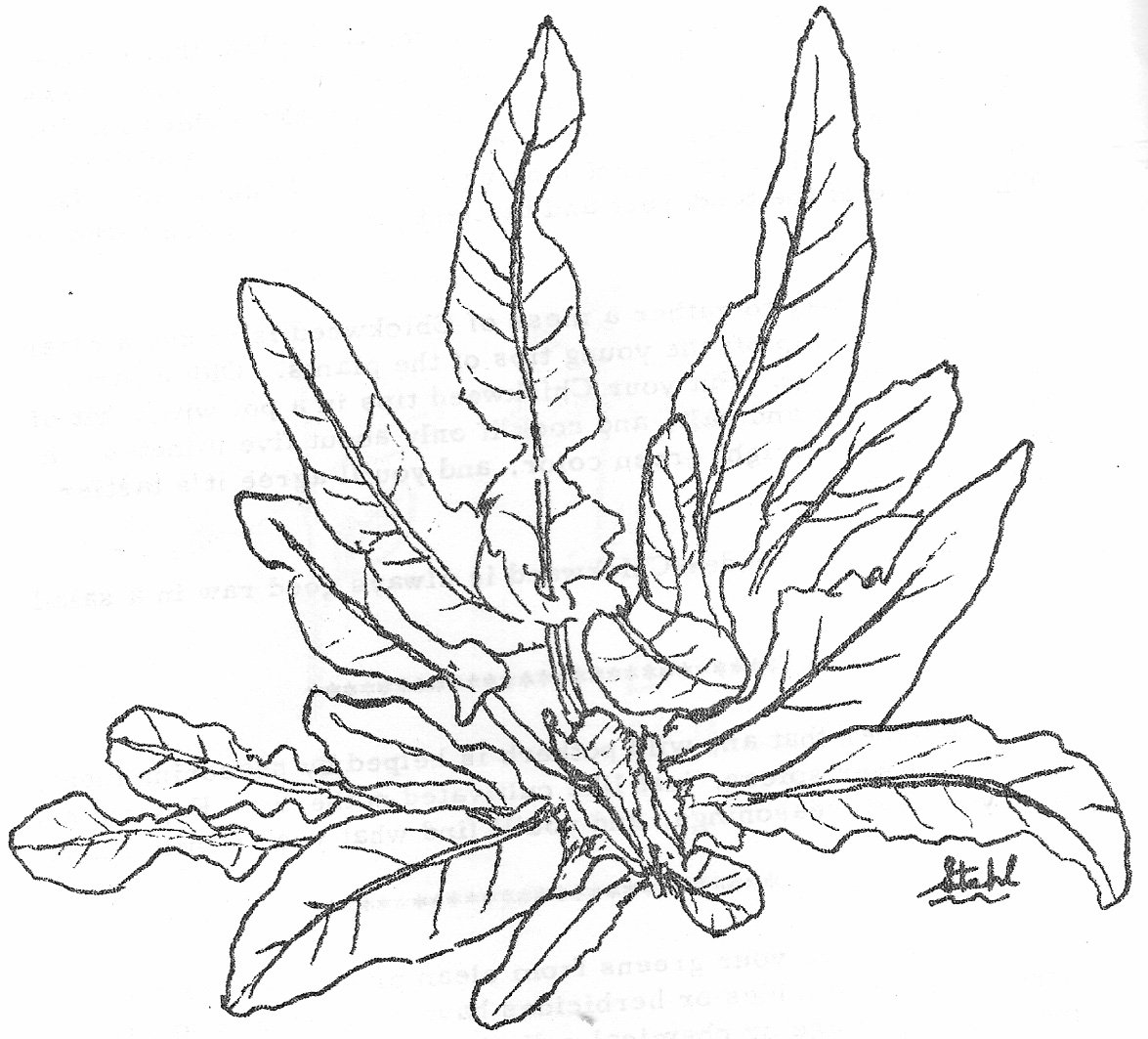 Inspirational Plant Coloring Pages 39 For Your Free Coloring Book