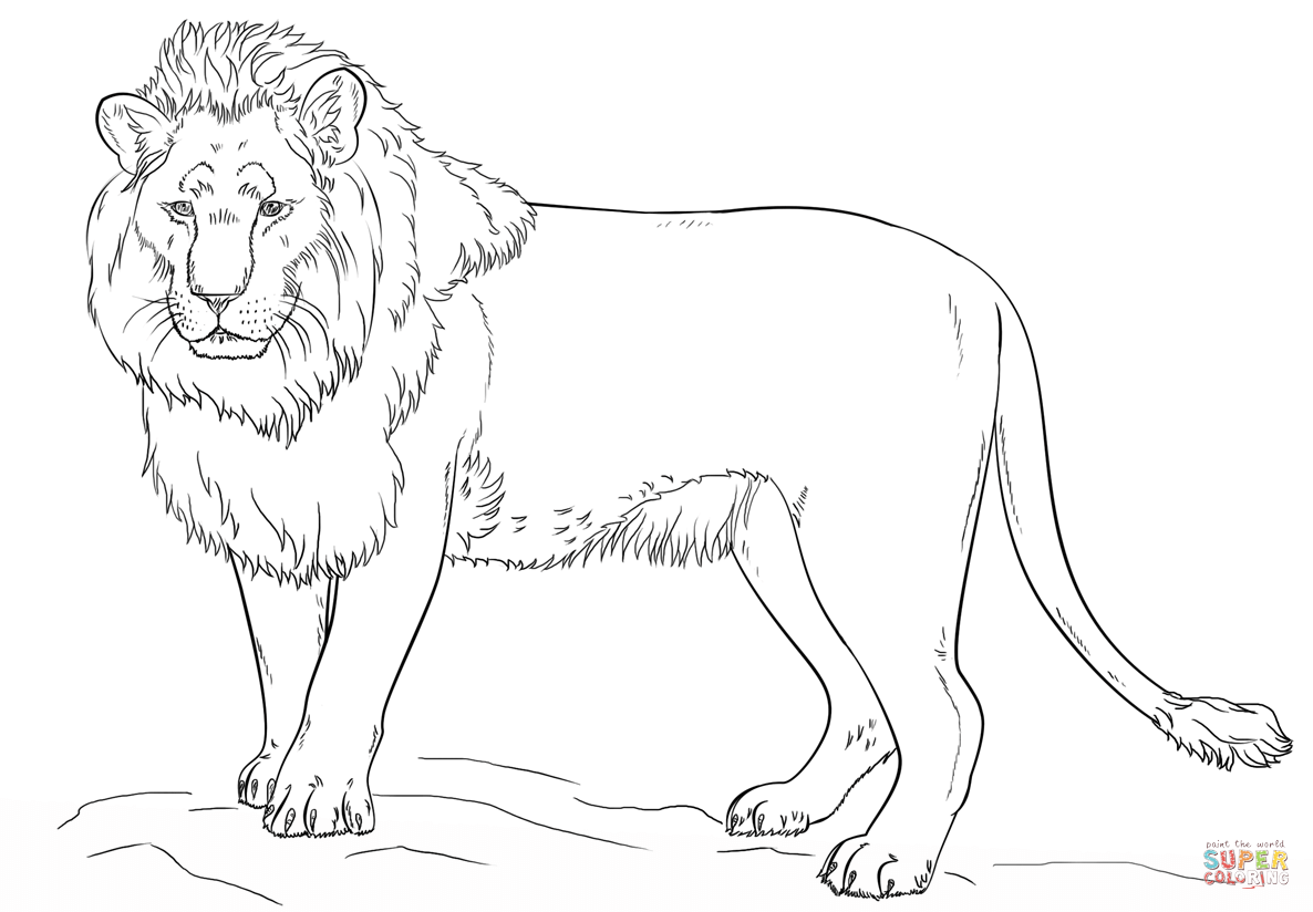 Standing Lion Coloring Page