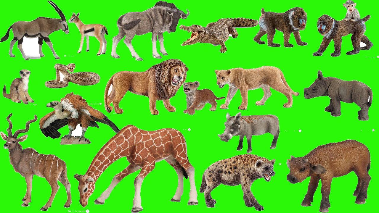 Wild Safari Animals,nocturnal,desert,water Zoo Animals