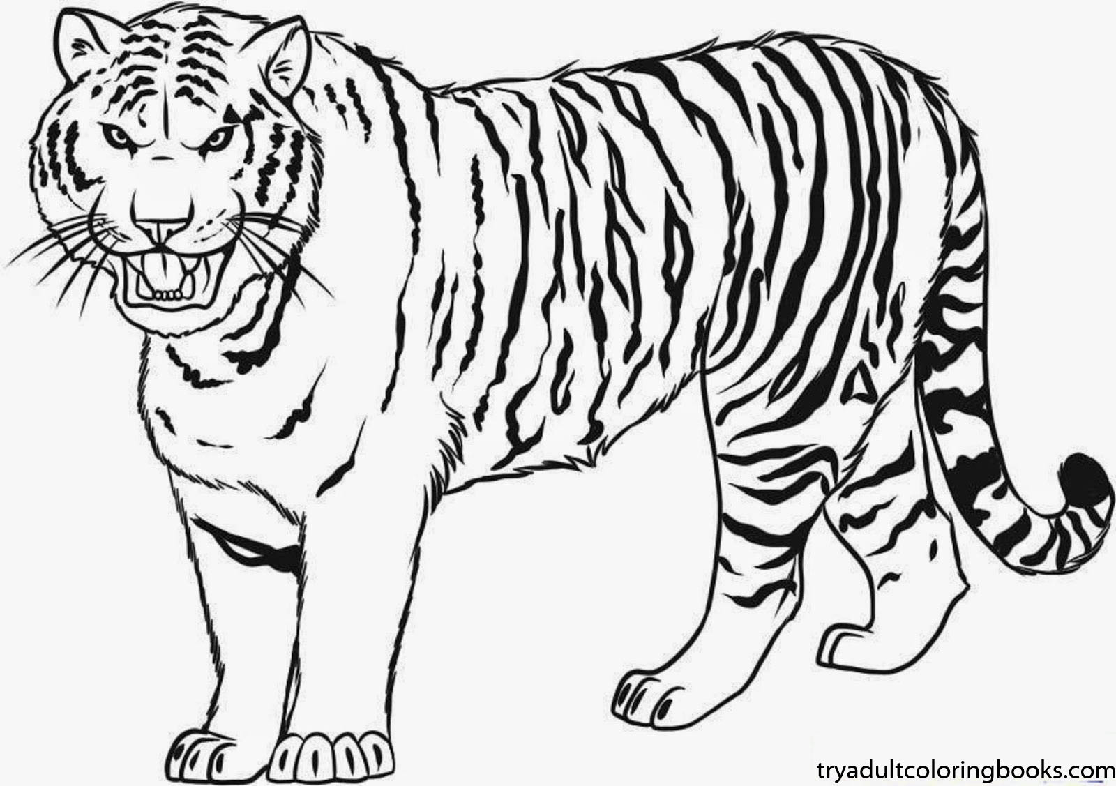 Tiger Coloring Pages – NEO Coloring