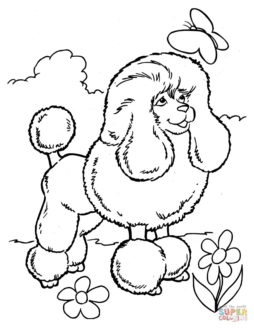 Toy Poodle Coloring Page