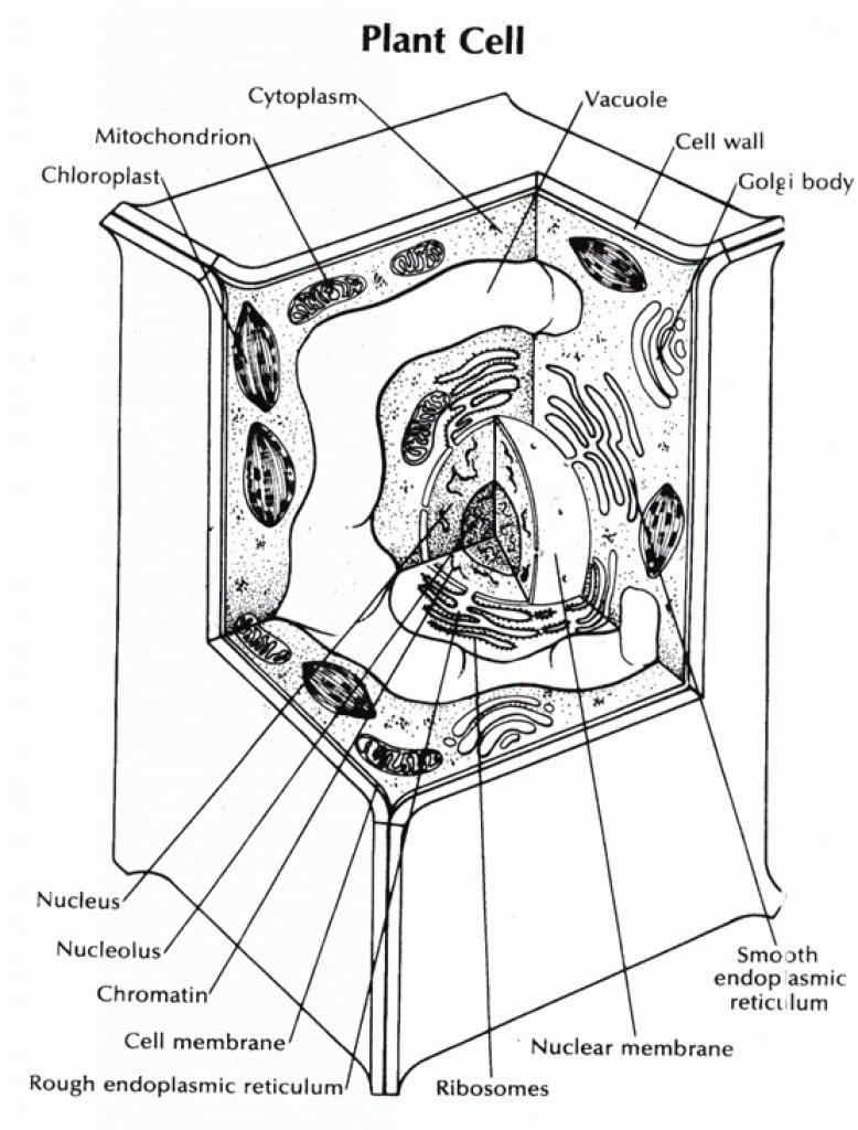 Cell Membrane Coloring Worksheet Free 6158 Coloring Worksheet