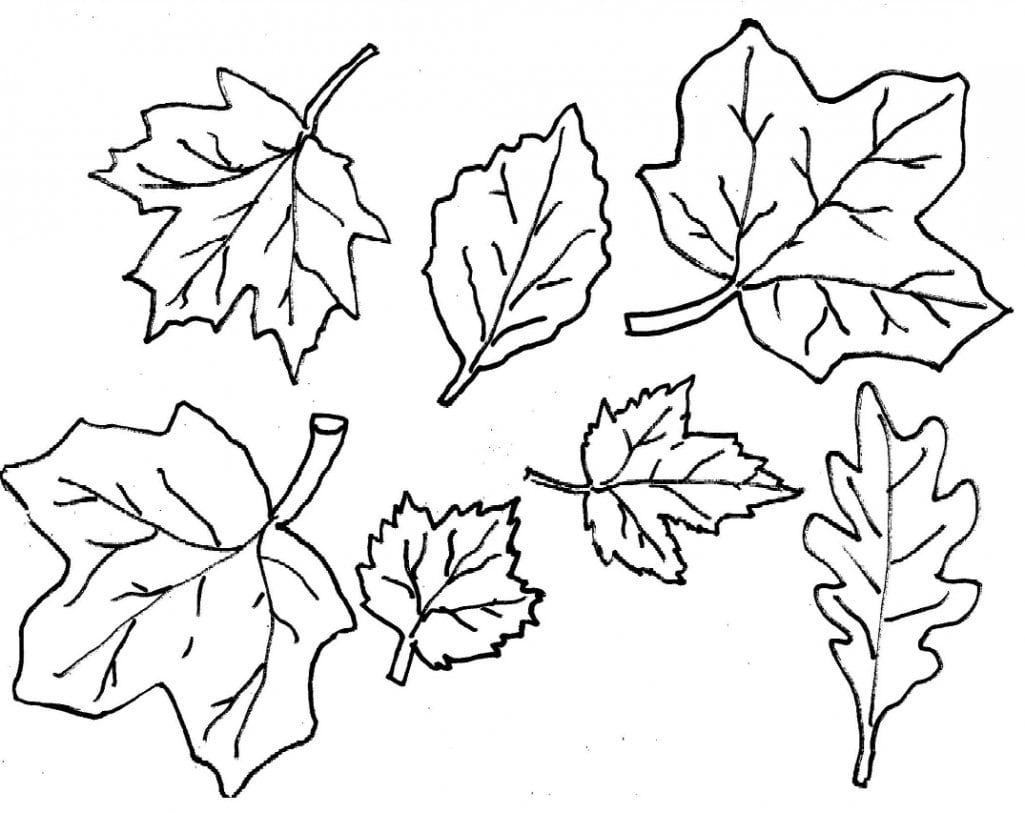 15 Autumn Leaves Coloring Pages, Coloring Now Blog Archive Fall