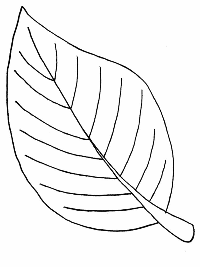 Coloring Pages Of Leaves Free Printables  1207