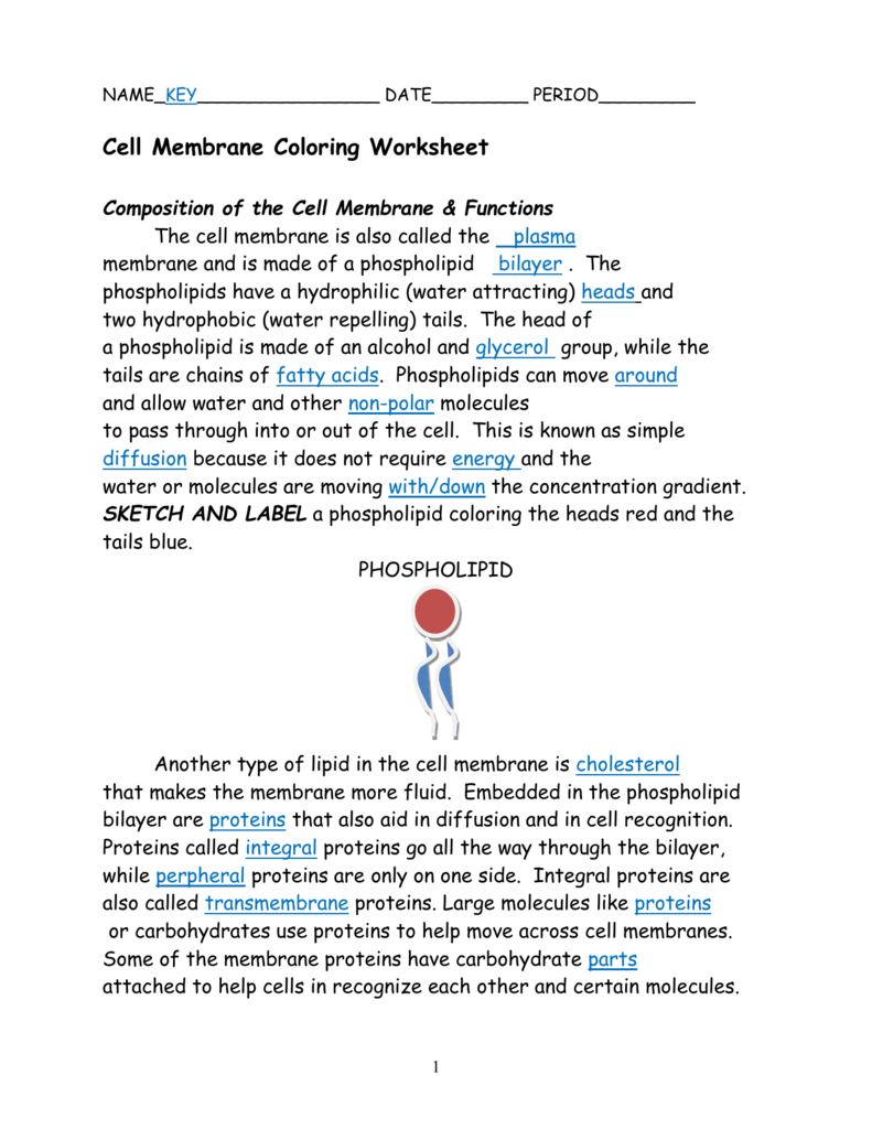 006637842 1 With Cell Membrane Coloring Worksheet