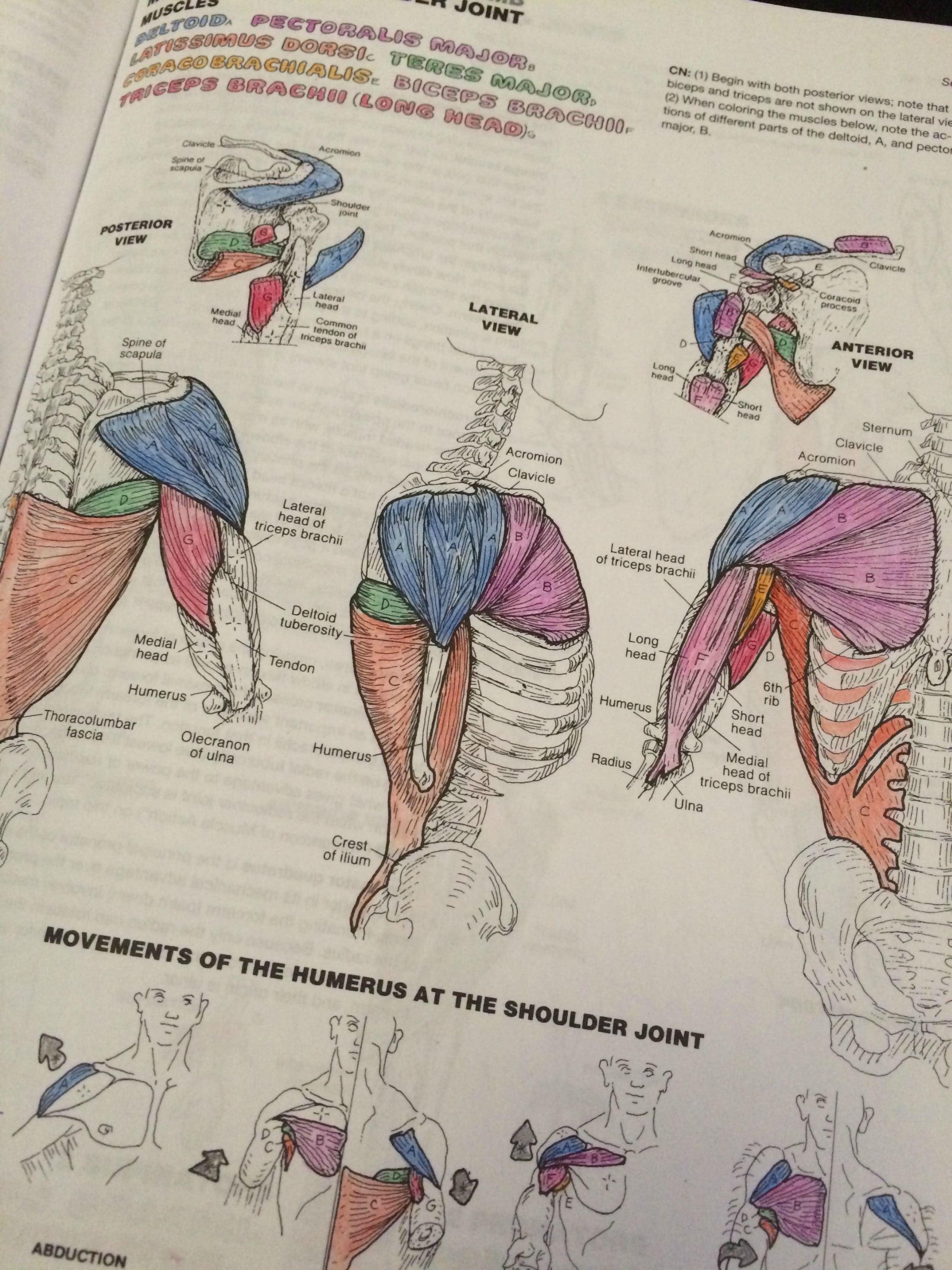Human Anatomy Coloring Book Pdf