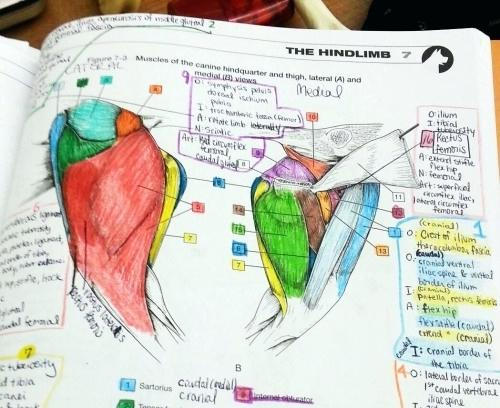 Awesome Veterinary Anatomy Coloring Book