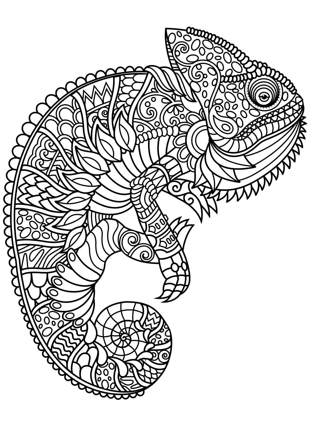 Animal Coloring Pages Pdf Adult Dog Cat And Books Different