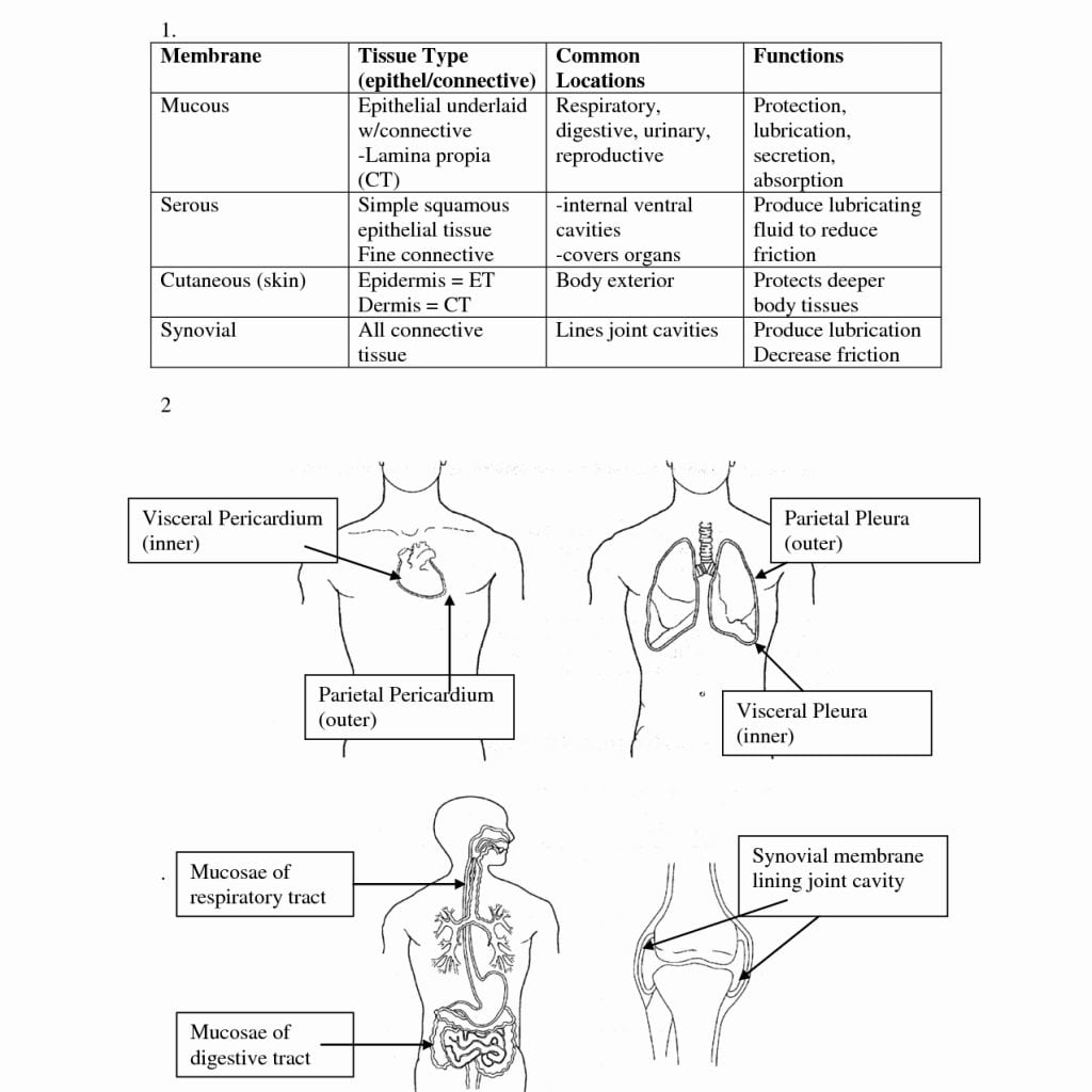 Human Anatomy And Physiology Coloring Workbook Chapter 5 Answers