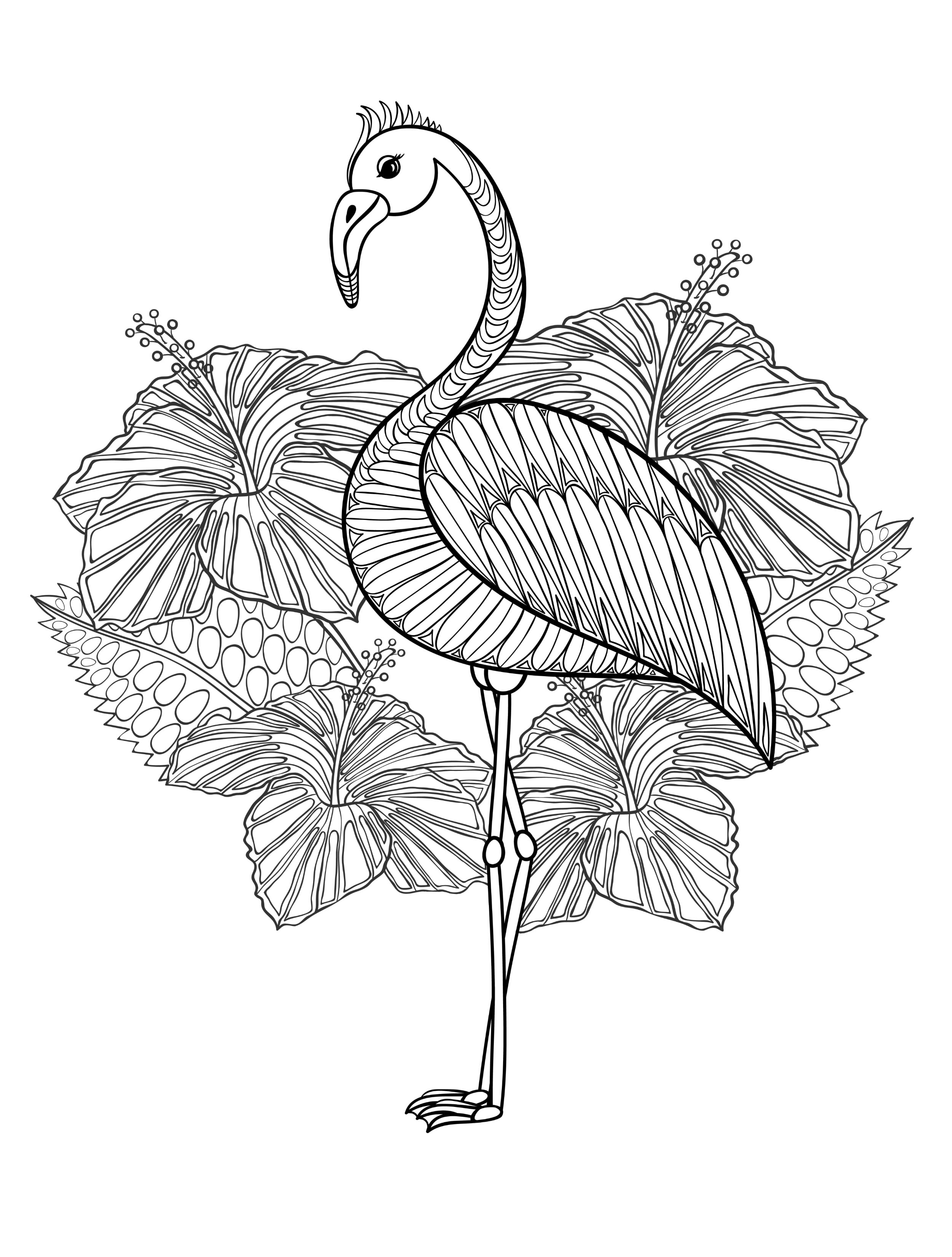 Flamingo Coloring Pages With Wallpapers Wide Mayapurjacouture Com