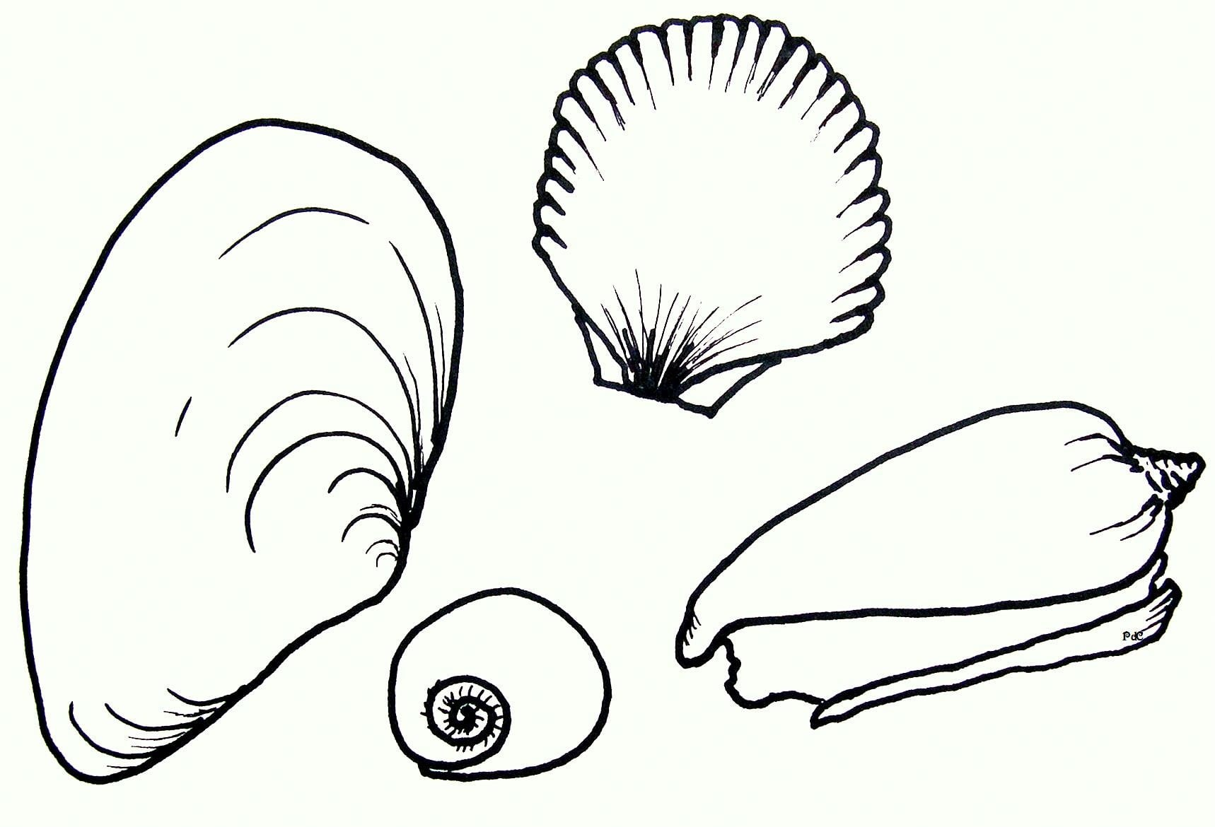 Free Printable Seashell Coloring Pages For Kids Shell