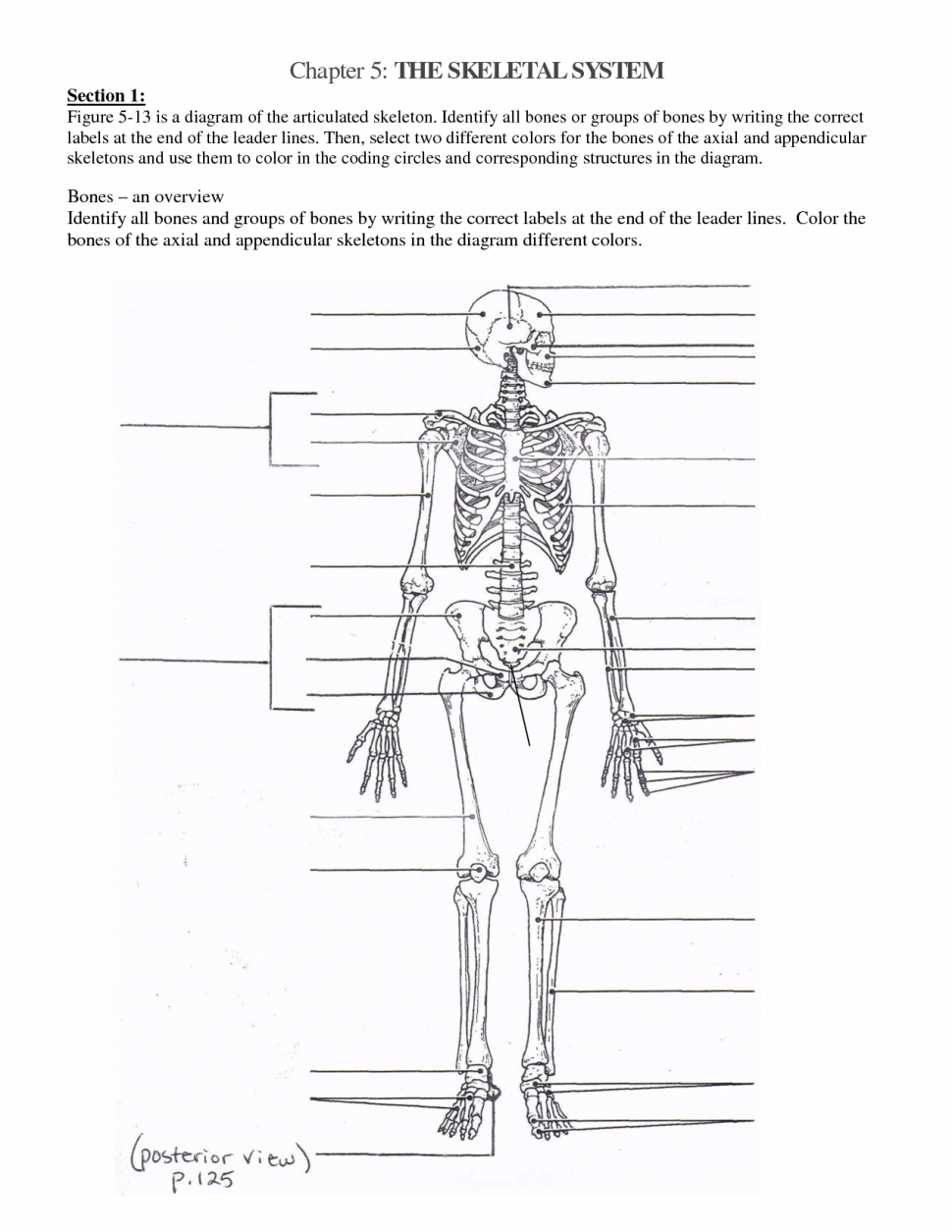 Complete Anatomy And Physiology Coloring Workb  6694