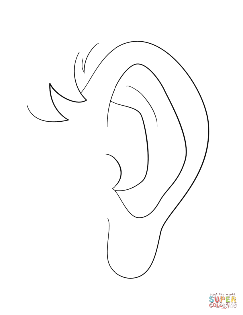 Human Ear Coloring Page